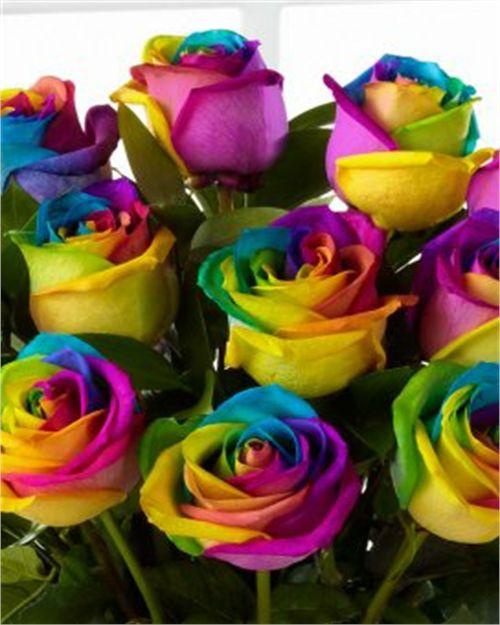 Pin By Monica Sorensen On Multi Color With Images Rainbow Roses
