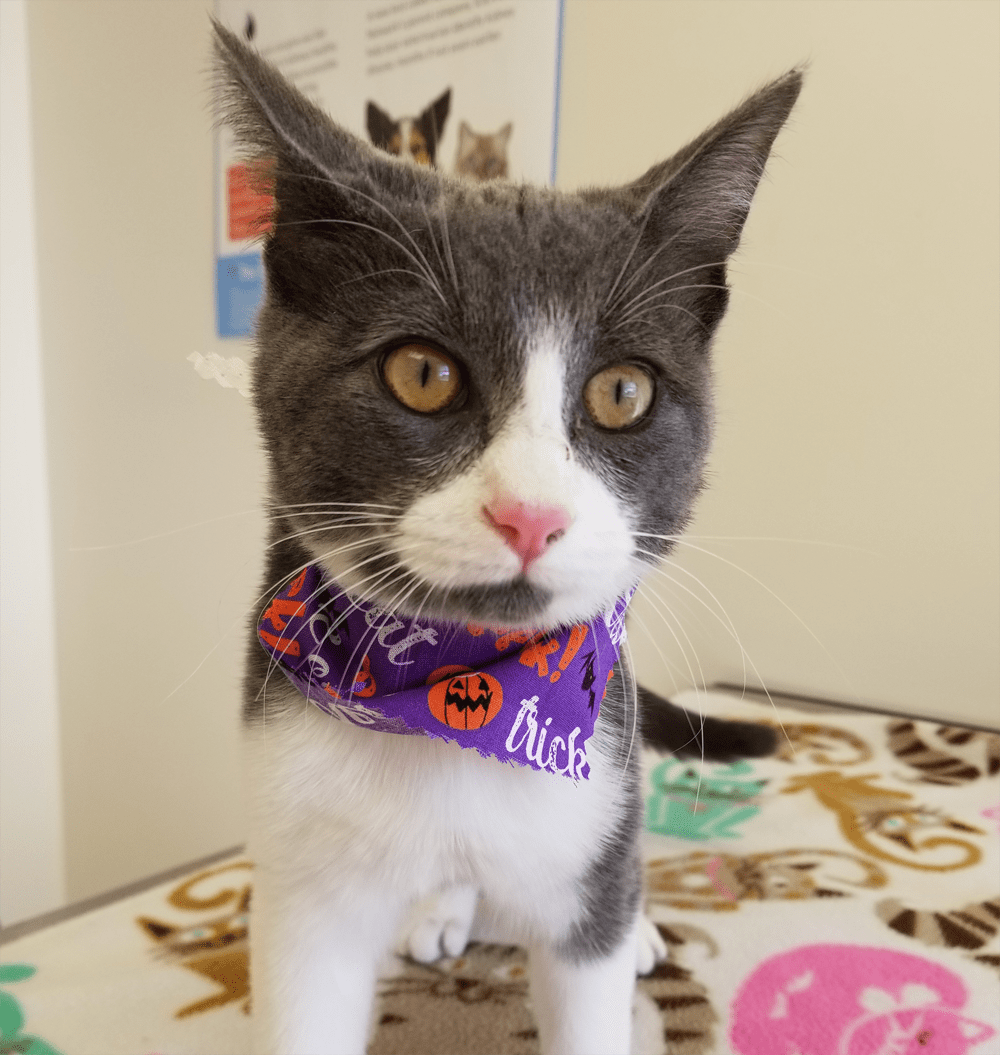 Meet The Adorable Rescue Cat With Colitis And A Heart