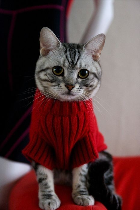 sweatering catty