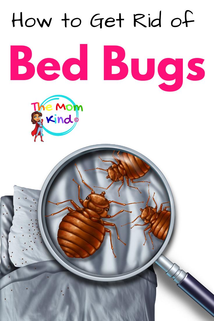 Bed Bug Infestation at Home? Safe, Effective Ways to Solve