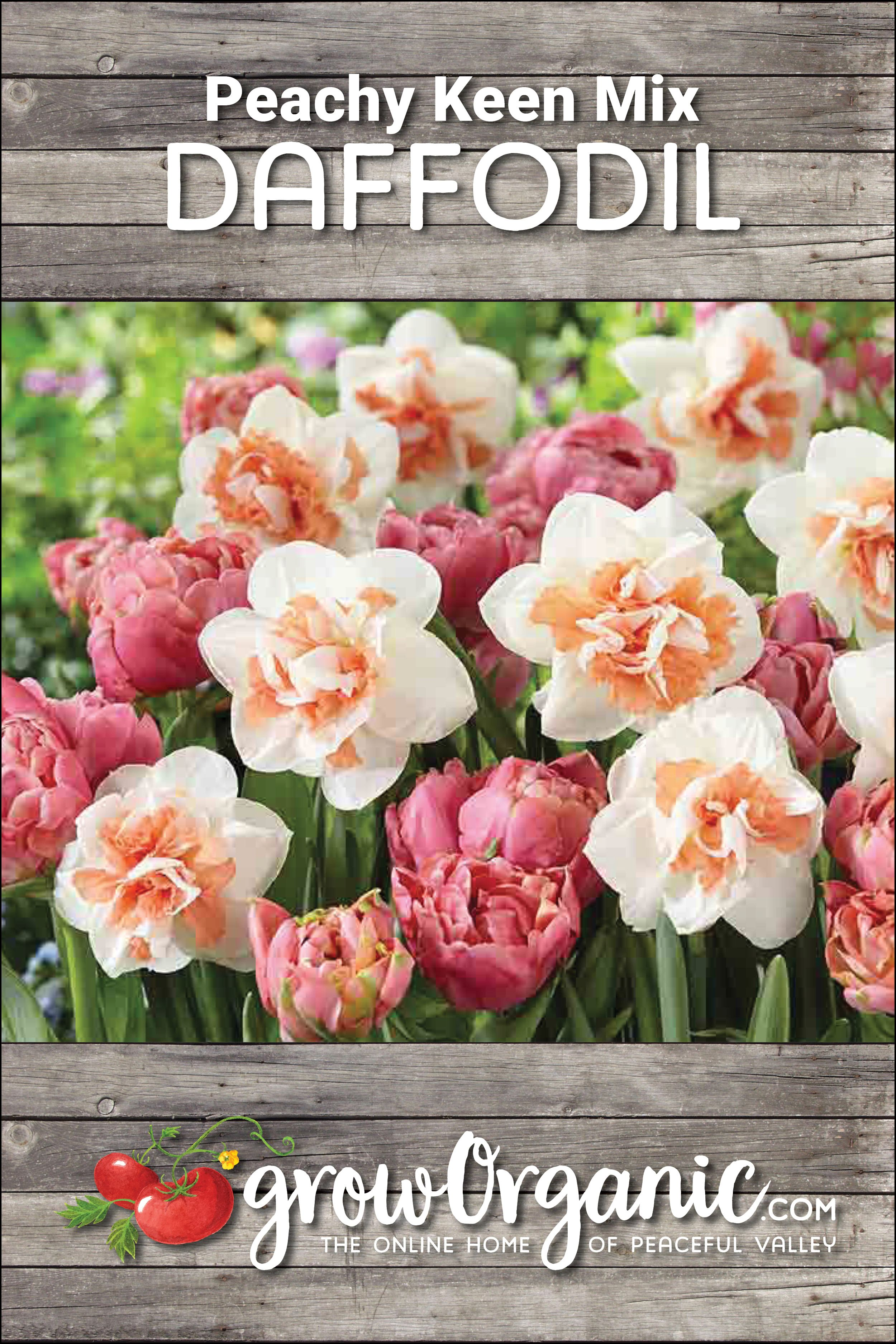 Peachy Keen Mix 30 Pack When To Plant Tulips Planting Bulbs Plants