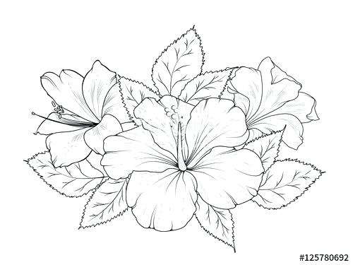 Line Drawing Of Hibiscus Blossom Google Search In 2020 Flower Line Drawings Flower Drawing Flower Bouquet Drawing