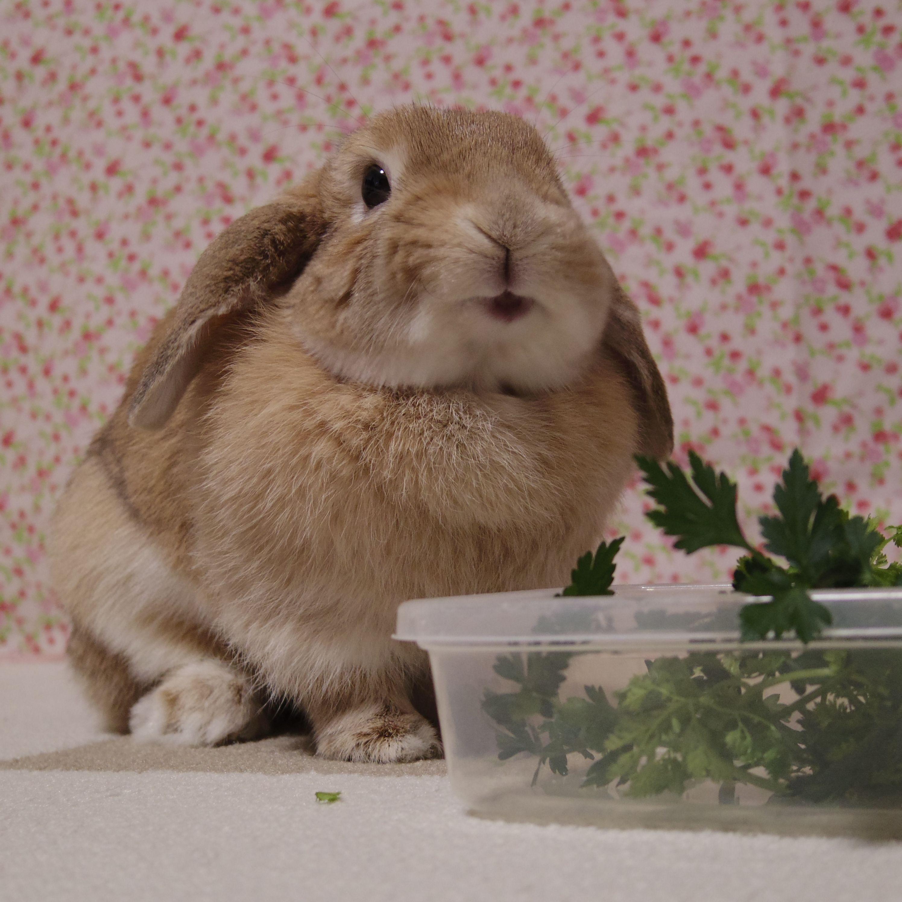 Rabbit Bunny おしゃれまとめの人気アイデア Pinterest Reeetan うさぎ