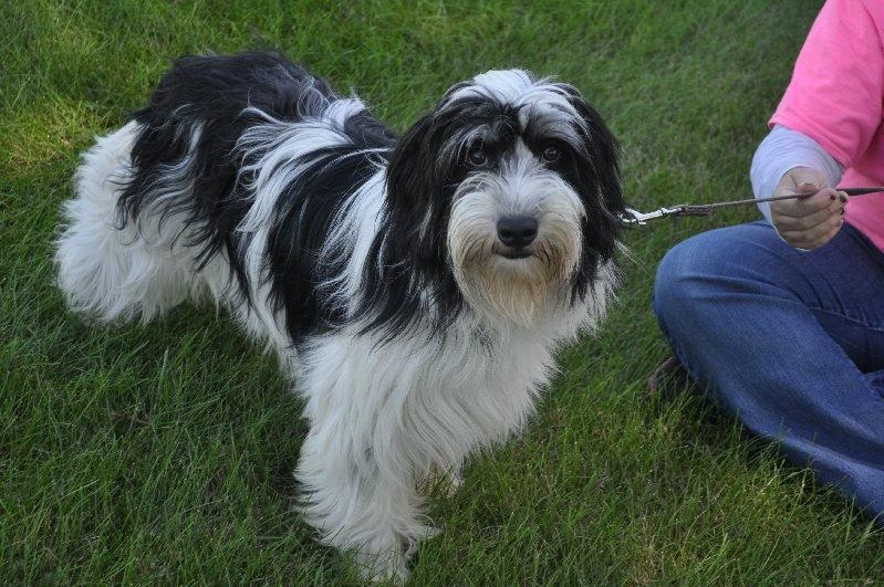 Adopt Cameron On Fluffy Dogs Dog Mixes Dogs
