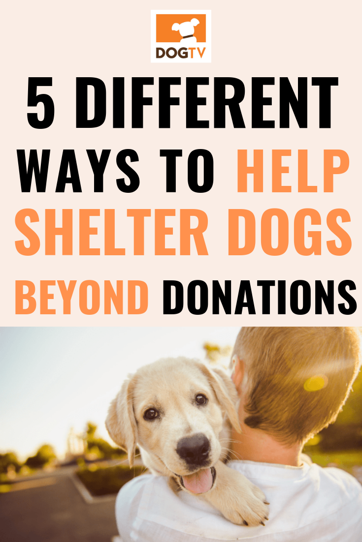 5 Ways To Help Shelter Pets Pets Pet Hacks Dog Lovers