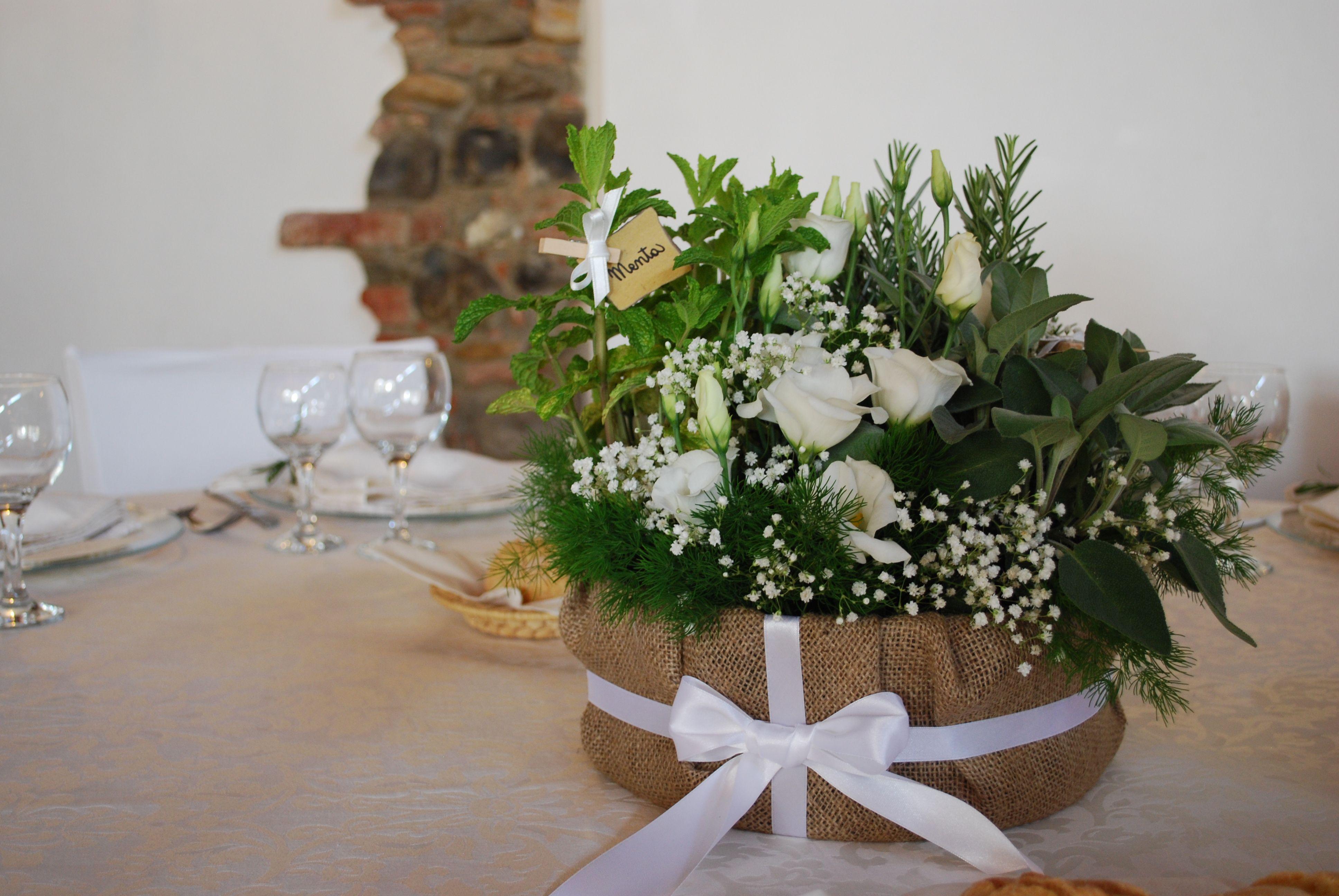 Erica gracilis Cape heather Dobbies Garden Centres