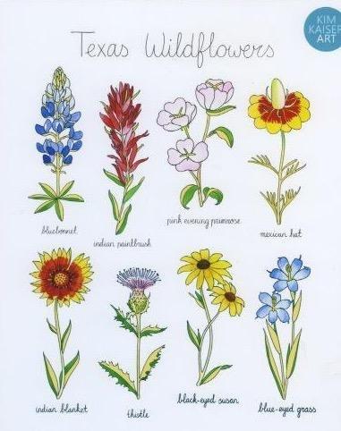 Texas Wildflowers In 2021 Wildflower Tattoo Wildflower Paintings Wildflower Drawing