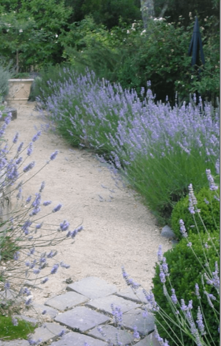 Bloggers Beautiful Gardens a Series…Featuring Trish of Trouvais - Cindy Hattersley Design