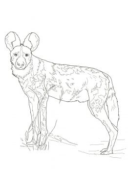 kulan wild ass animal colouring pages pinterest