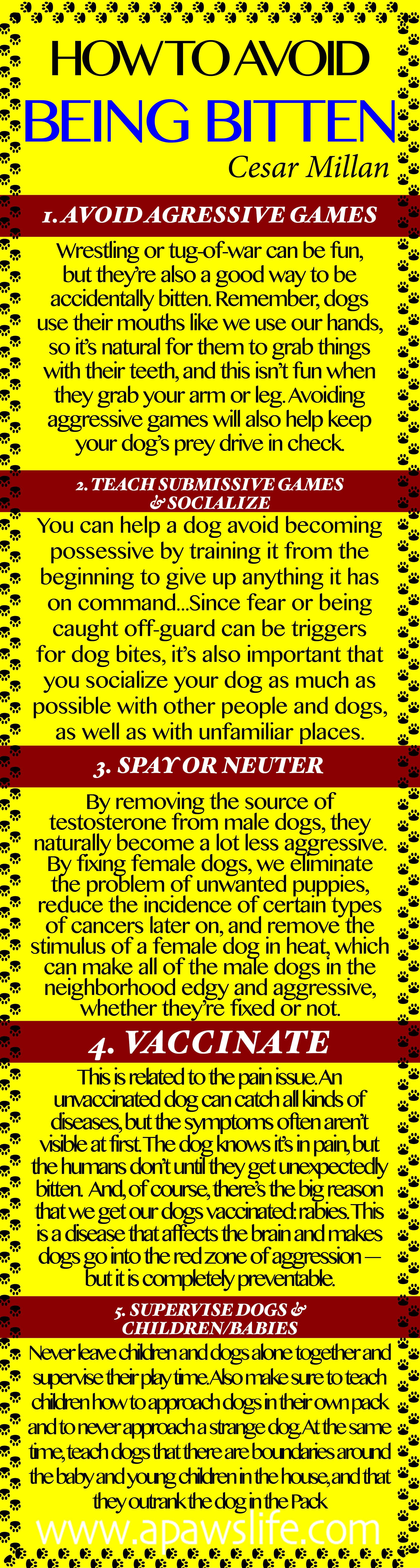 cesar millan how to stop your dog biting