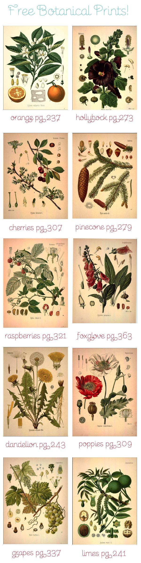 free botanical art prints (more designs than shown)