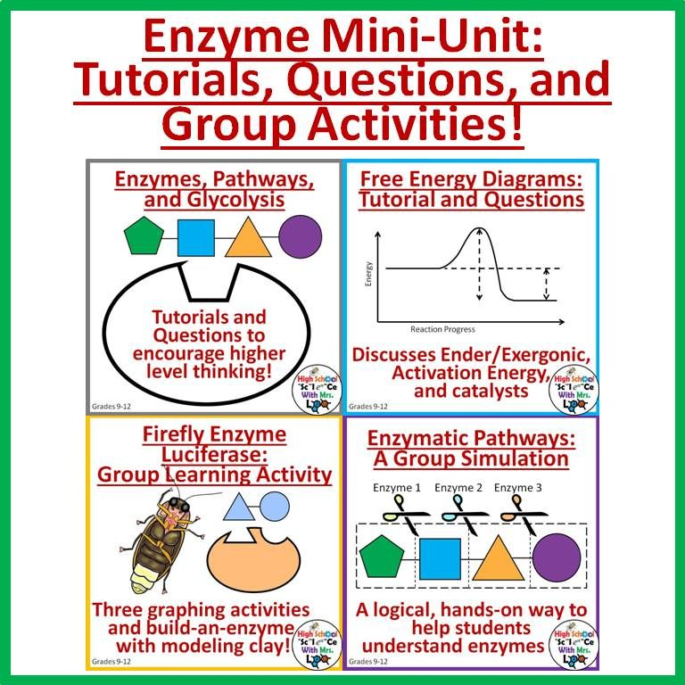 Enzymes Mini-Unit: Worksheets, Graphing Activities, and Paper ...