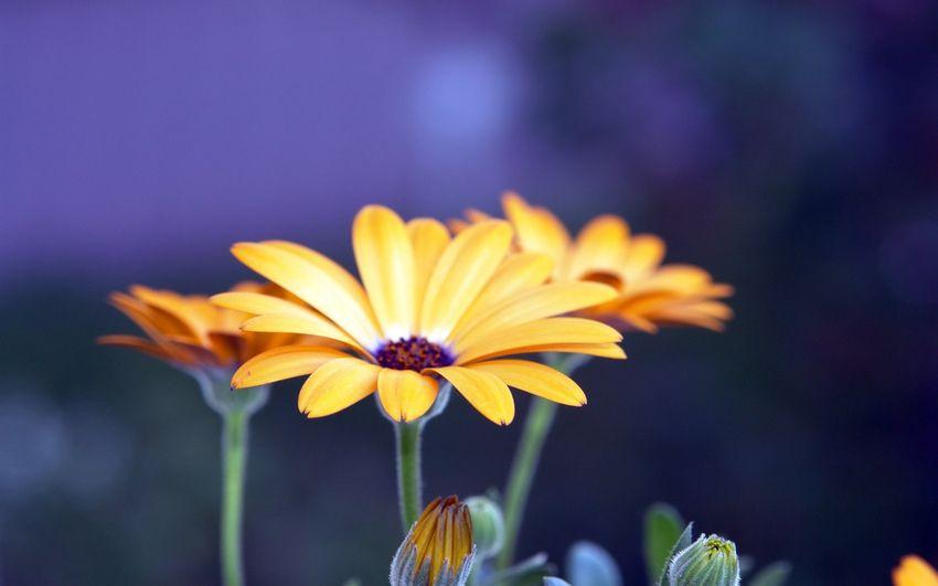 Красивые картинки хорошего качества (37 фото) • Прикольные ...