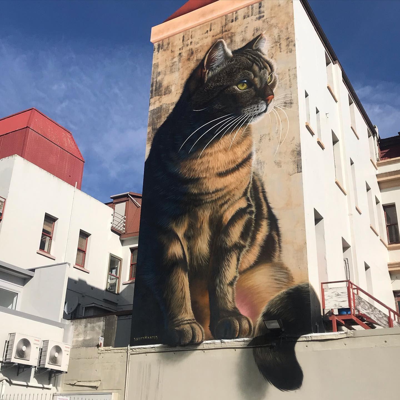 Mantis Mike In Palmerston North New Zealand 2020 In 2020 Wall Street Art Street Art Amazing Street Art