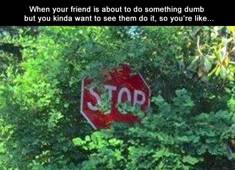 Morning Funny Picture Dump 32 Pics when your friend is about to do something but you kinda want to see them do it, so you're like... stop