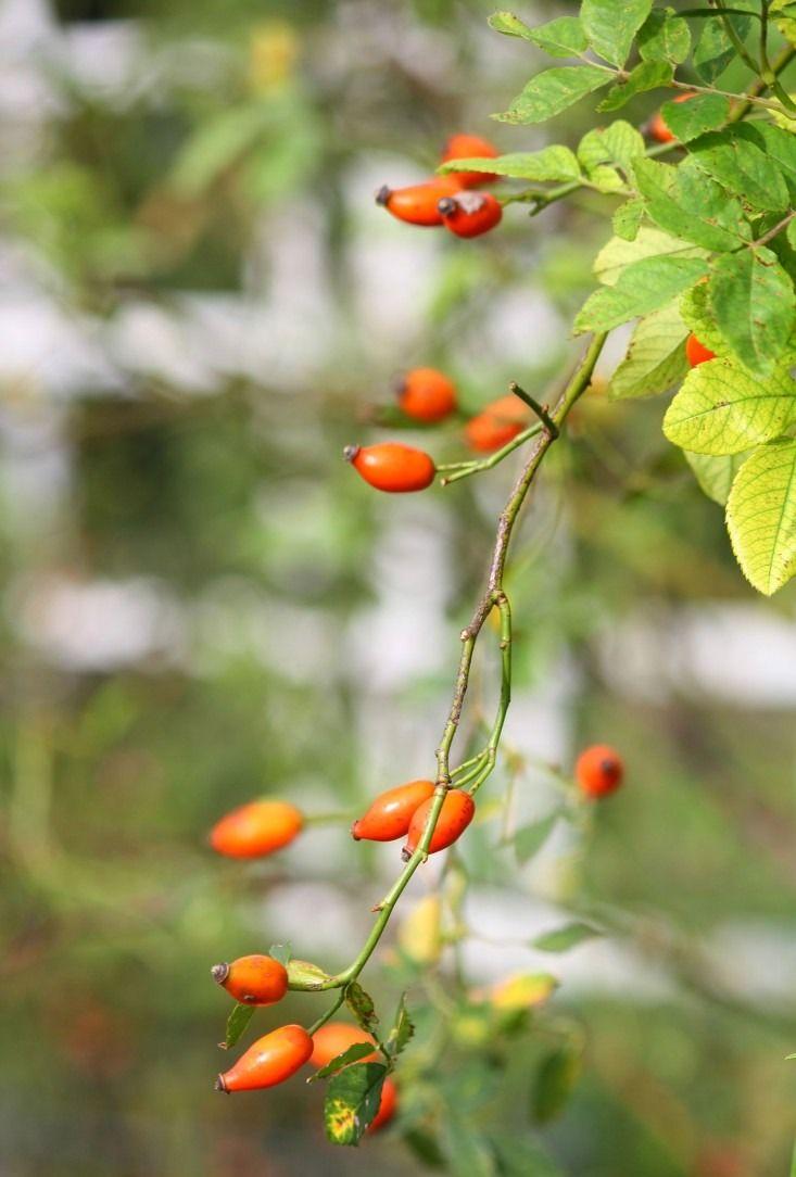 Via Gardenista.com
