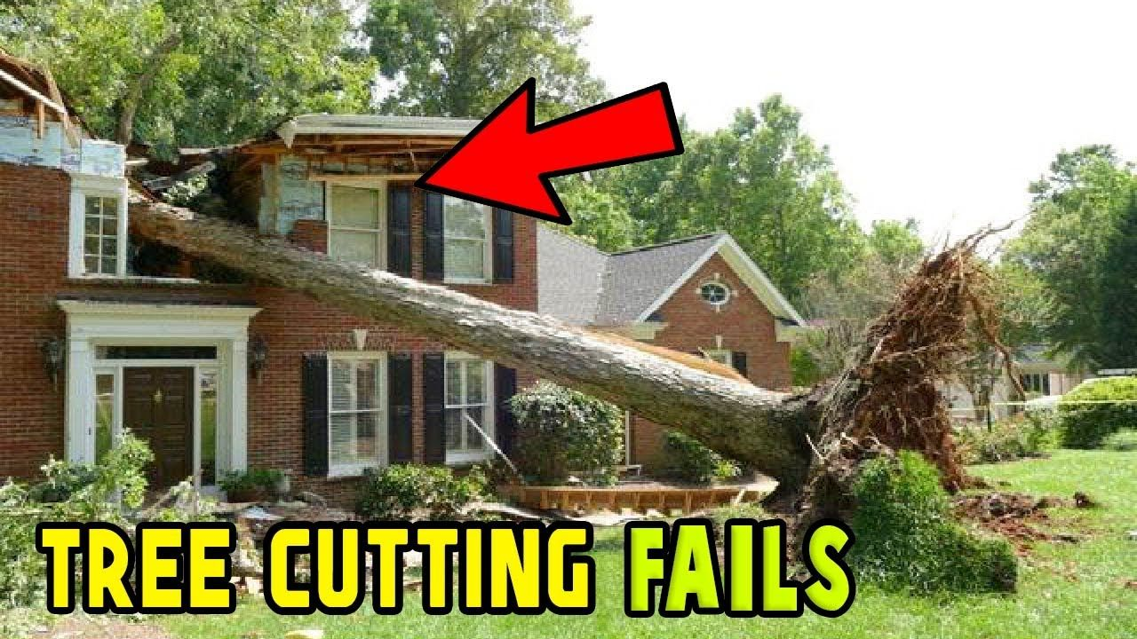 Tree cutting fails and idiots with chainsaws FAIL COMPILATION