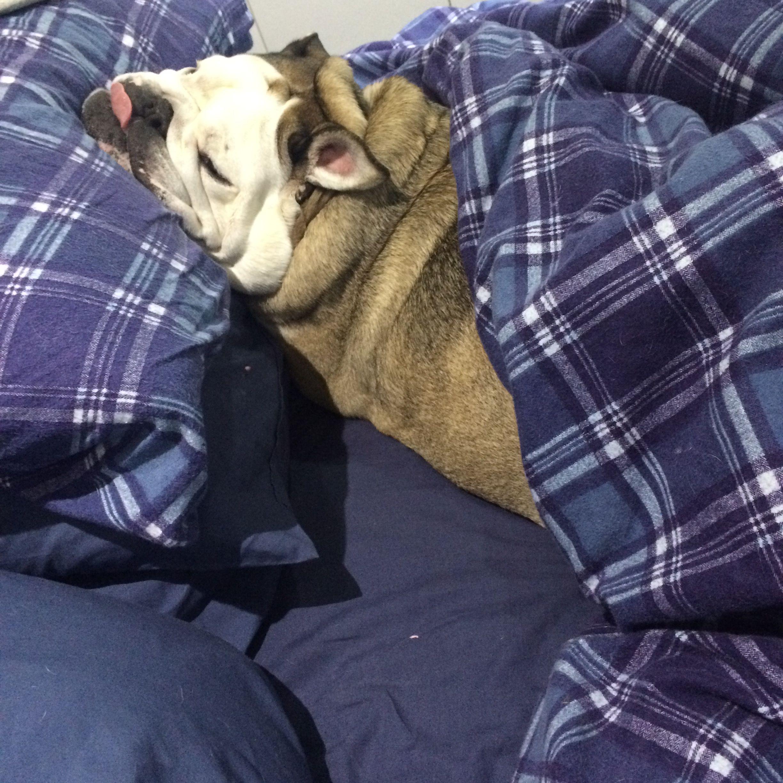 Dumplings put herself to bed
