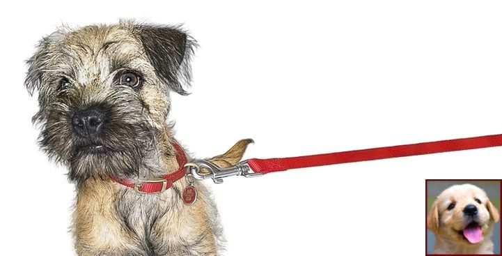 1 have dog behavior problems learn about house training