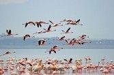 Jezioro Nakuru.