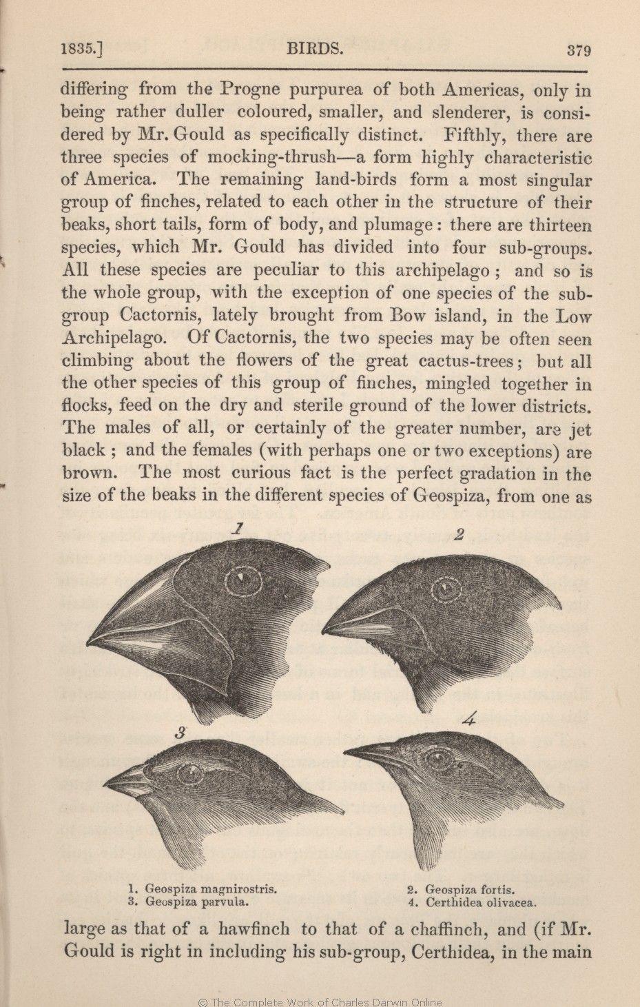 Darwin Illustrations Origin Of Species Species Nature [ 1461 x 929 Pixel ]