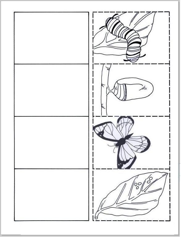 Anasınıfı Kelebeğin Oluşumu Boyaması 5 Okul öncesi Fen Life