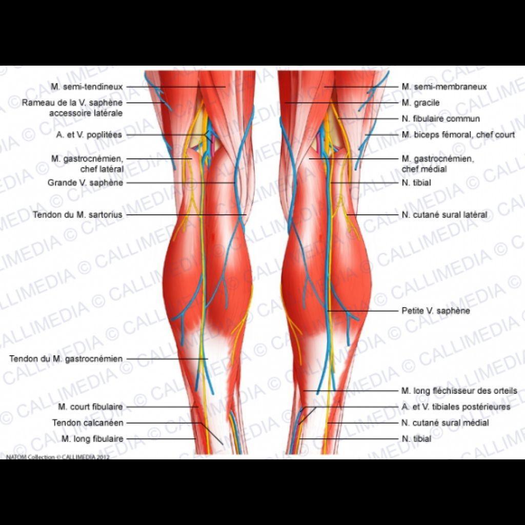 Image result for diagram of back of body | Anatomy | Pinterest