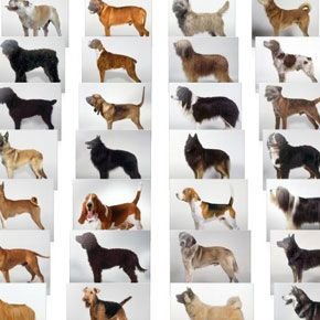 What Are The Best Dog Breeds To Own With Doggy Dan And