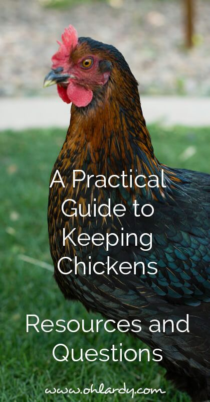 A Practical Guide To Keeping Backyard Chickens   Resources And Questions