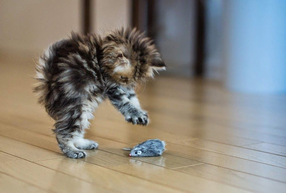 Kittens: It's A Mouse, It's A Mouse . . . .