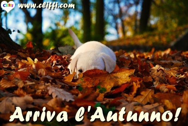 Oggi è il primo giorno d'#autunno!