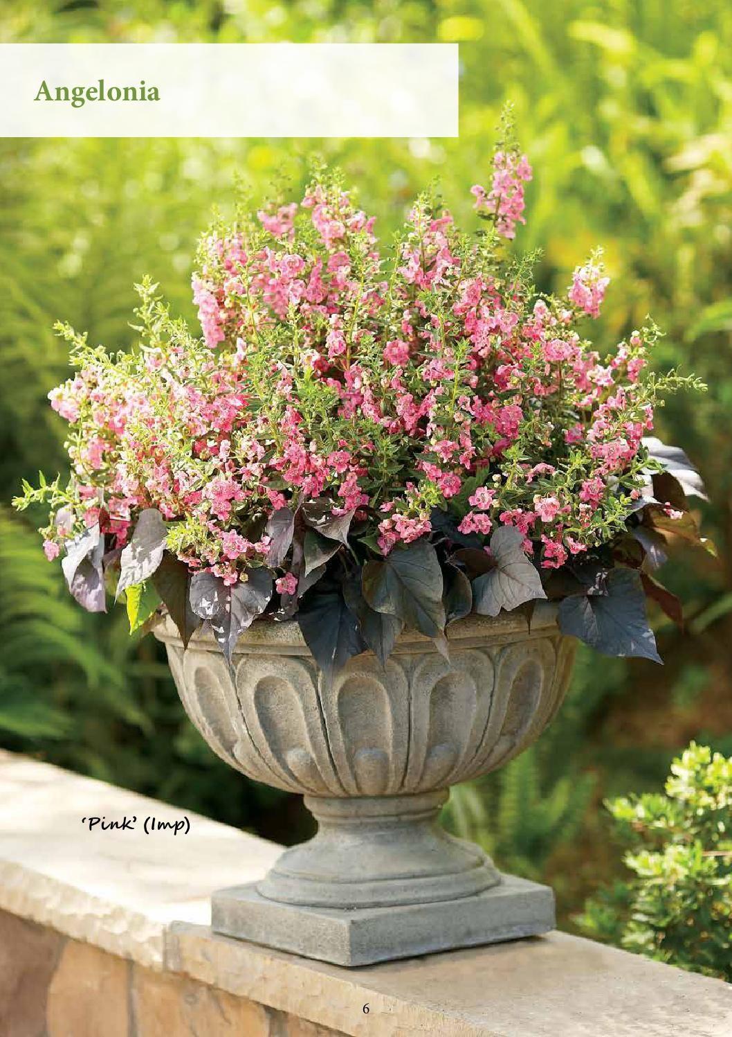 Summer Livin Garden Ideas Book Flower pots, Flower pot