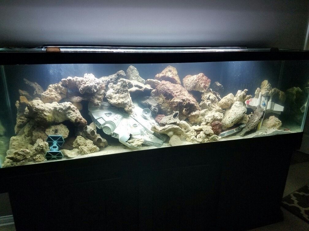 Star Wars Fish Tank Decorations Delightful 125 Gl Aquarium