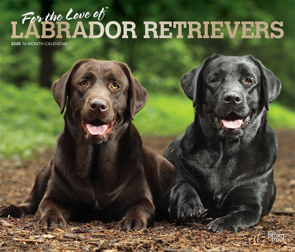 Lab Retriever Deluxe 2020 Wall Calendar Labrador Retriever