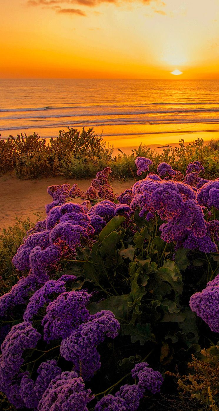 Flowers on the beach | Фотографии природы, Пейзажи, Природа