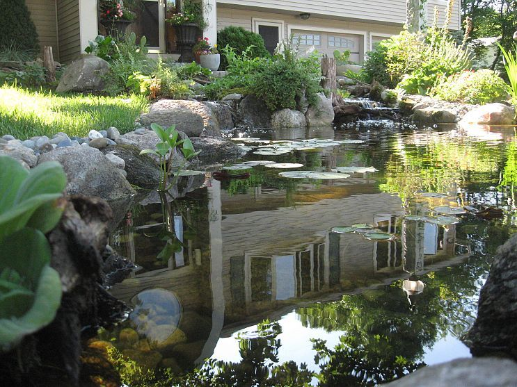 Nature Scapes Ecosystem Pond Transforms Yard Adding Curbside Appeal In Nh Backyard Water Feature Pond Landscaping Pond Water Features