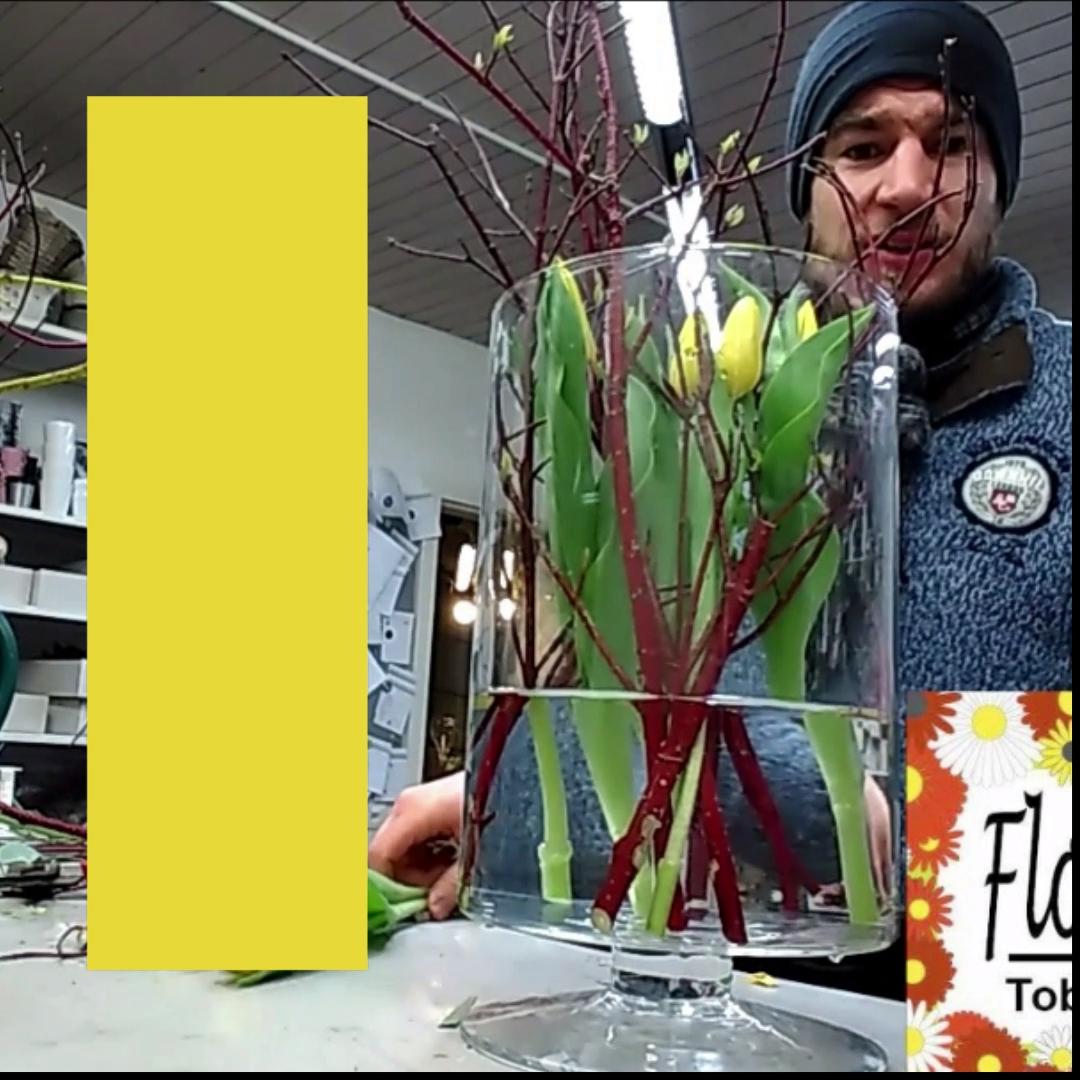 Tulpe in einem Glas