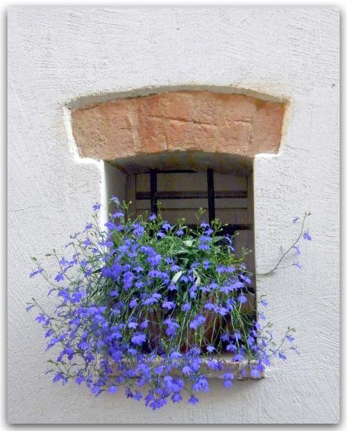 Italy.  Summery Janela
