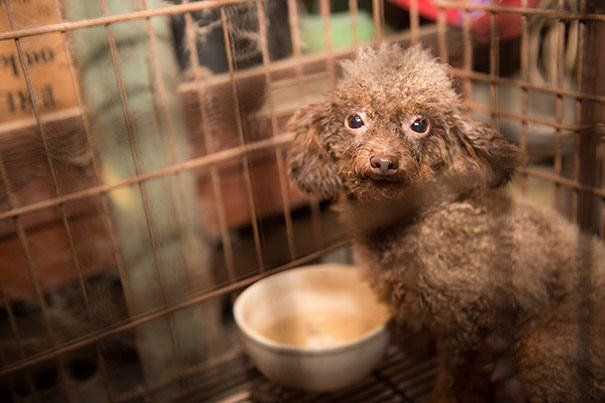 5 Common Illnesses That Occur In Puppy Mill Dogs And Why You