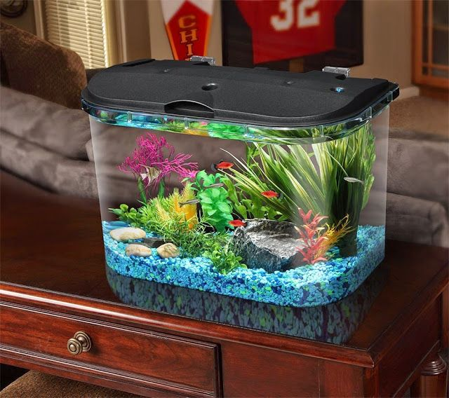 Best Diy African Dwarf Frog Tank Setup For 2020 Spiffy Pet Products Big Fish Tanks Betta Fish Tank Fish Tank Themes