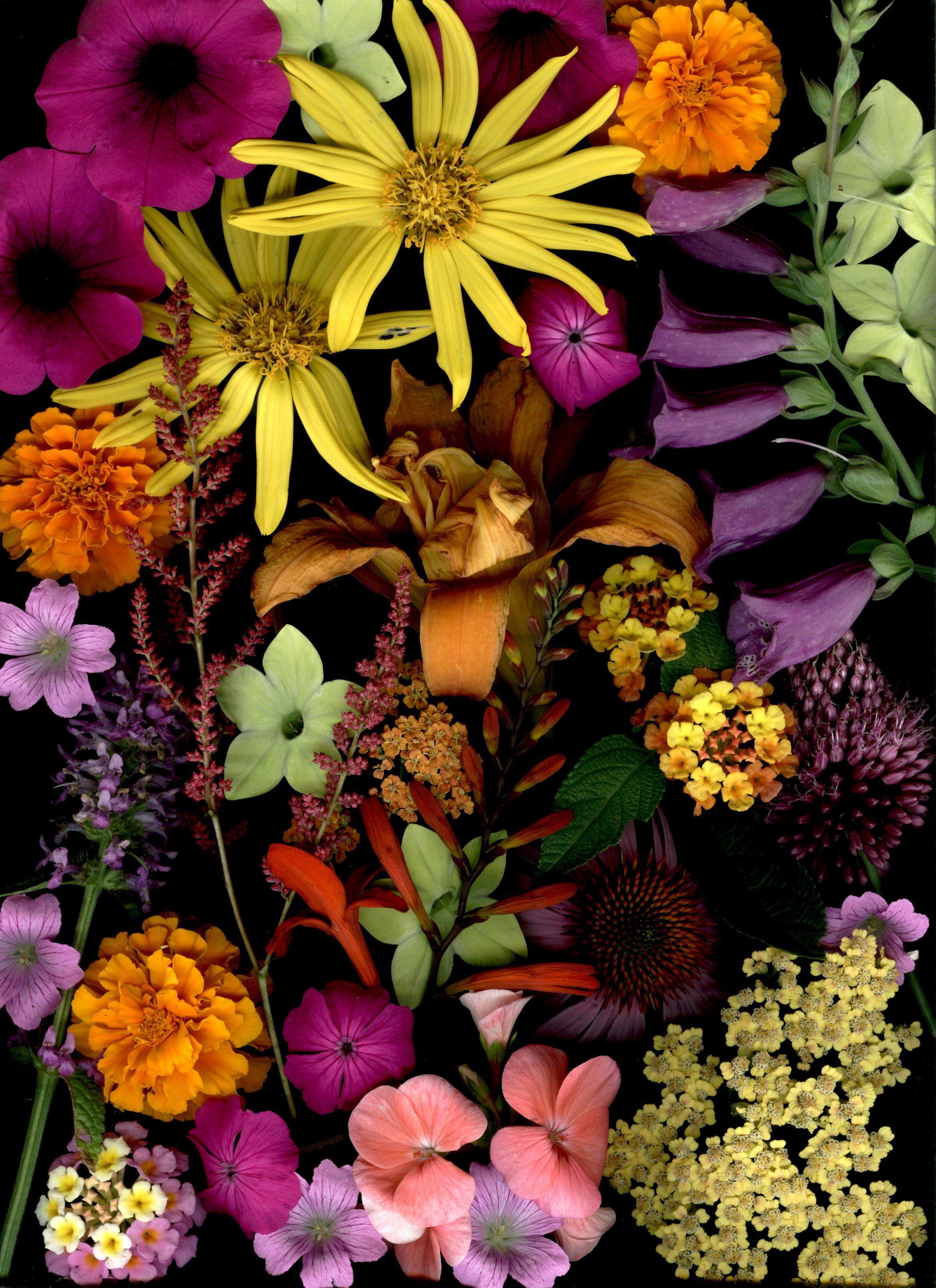 Scan1x2400 Jpg 2400 3301 Flower Aesthetic Flowers Photography Flower Phone Wallpaper