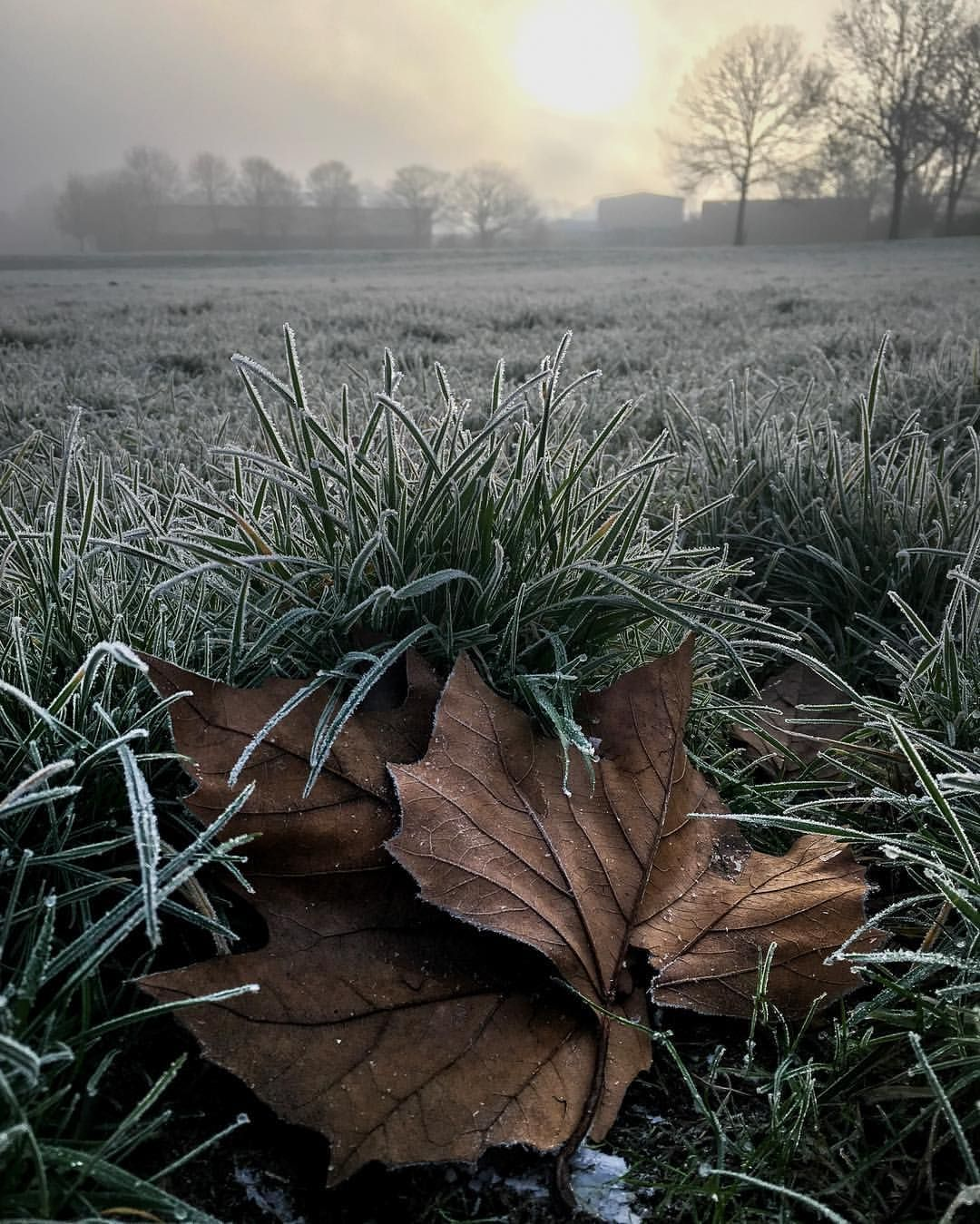 """""""Sheltering in a hollow""""   An Autumn leaf shelters from the winter night frost.   #Stoke #Staffordshire #photography #photo #Weather #local #park"""