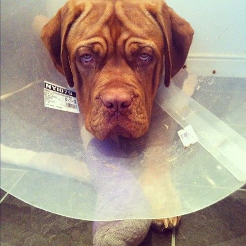 the cone of shame!