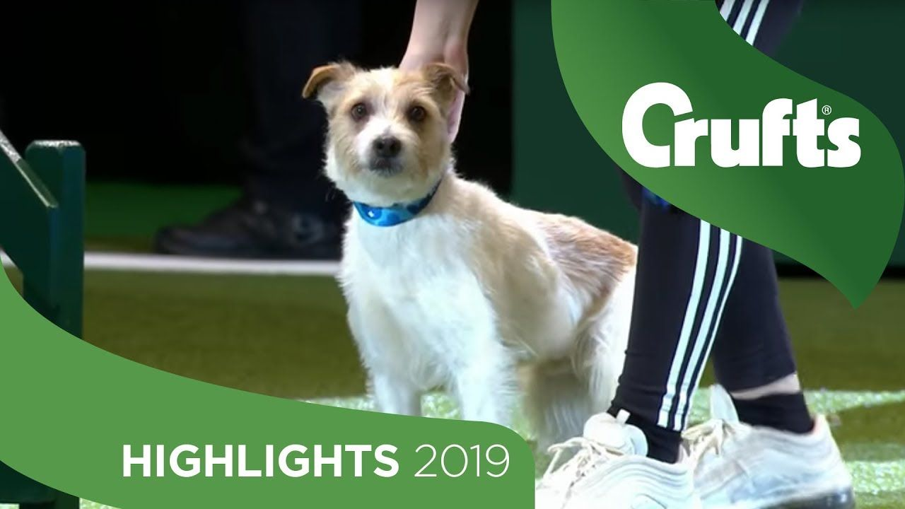 Crowd Favourite Olly The Rescue Dog Returns To The Crufts Stage
