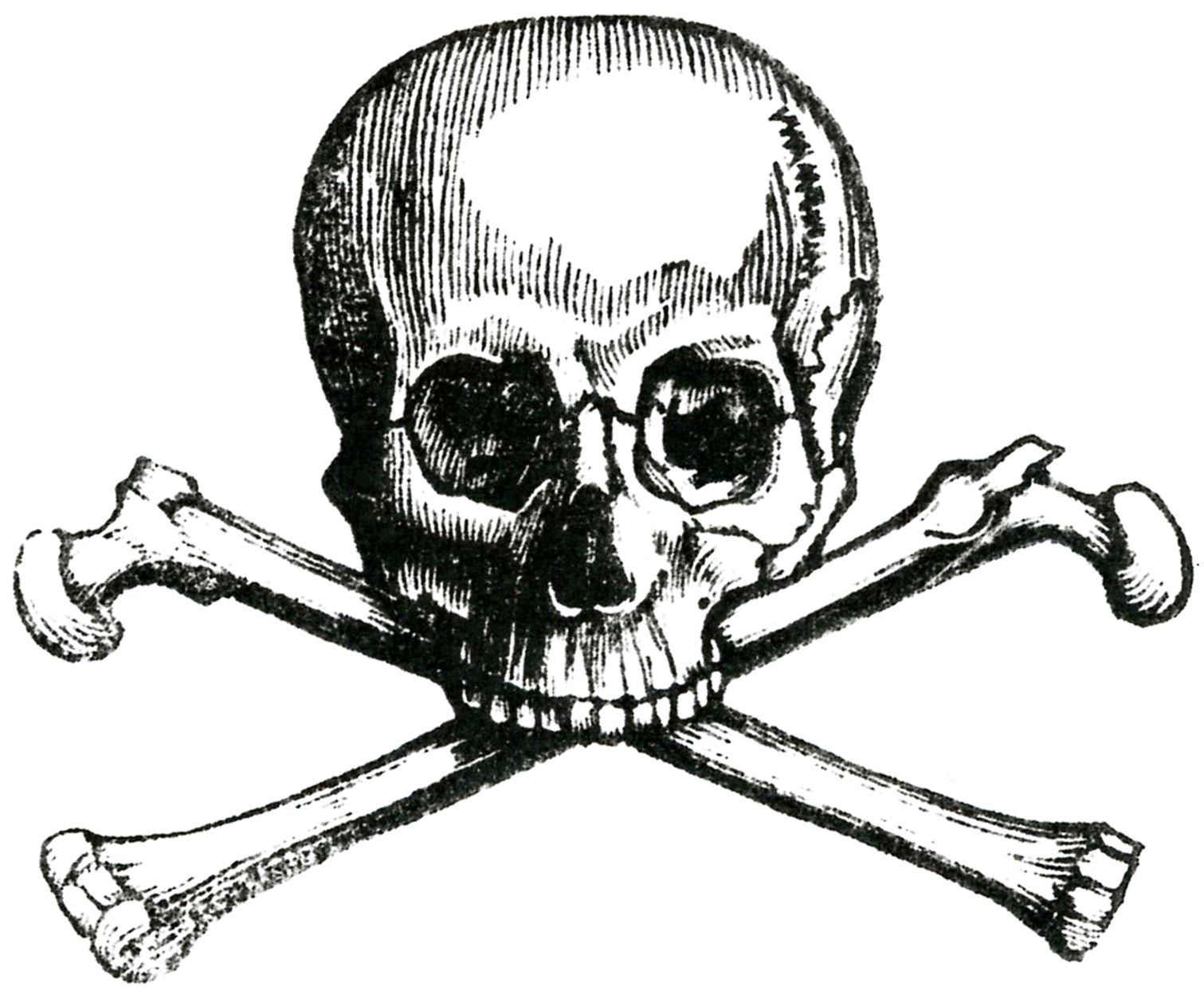6 skull images vintage anatomy clip art bones
