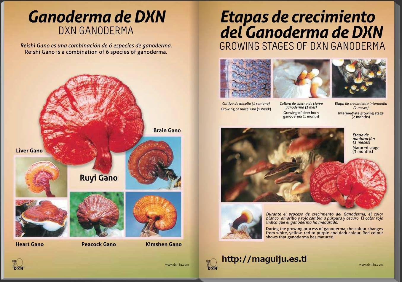 Te dejo mis Datos Para Qué te comuniques conmigo.  Margarita Fleitas DXN ID: 011331445 Tel:. (0054) 011-43828293/1558534415  E-mail: mggfleitas@hotmail.com   Web:http://maguiju.es.tl/  SKYPE: margarita.fleitas  https://www.facebook.com/magui.fley