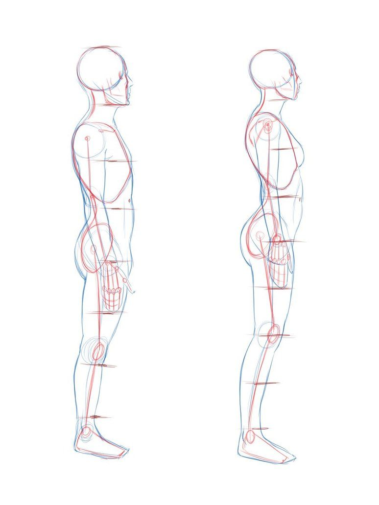 Image For Human Body Side View Cartoony Stuff Pinterest Human