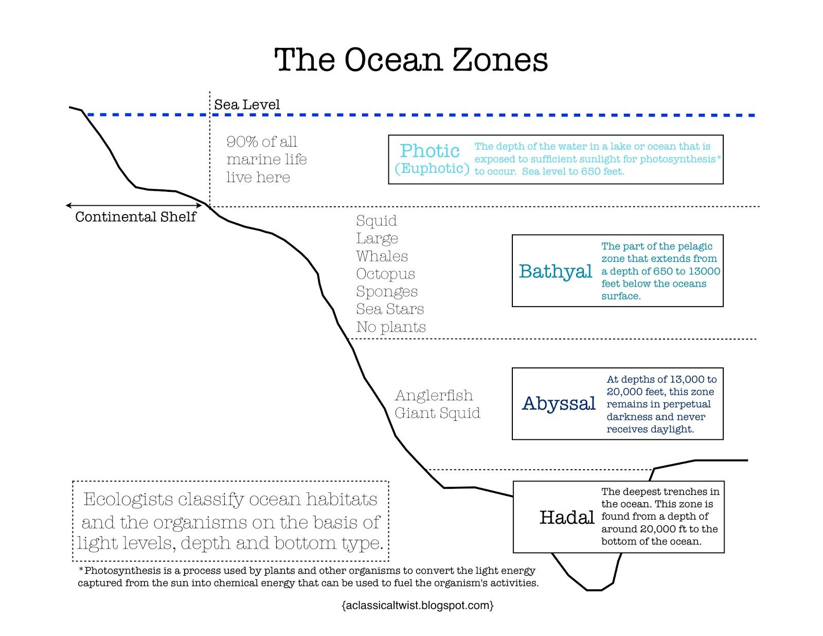Ocean Zones Worksheet High School