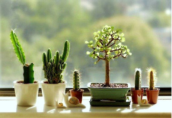 Create Your Windowsill Cactus Collection | Cacti, Create and Flowers