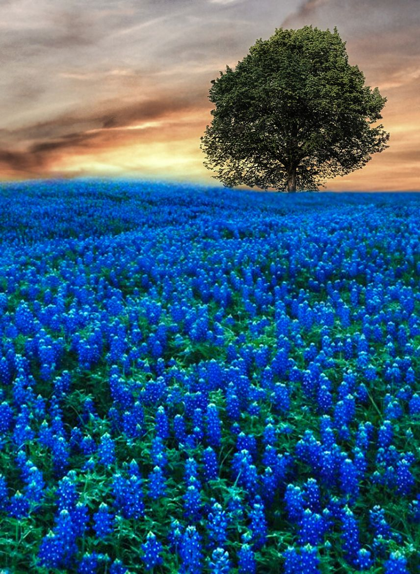 On Earth As It Is In Heaven Beautiful Landscapes Nature Photography Beautiful Nature